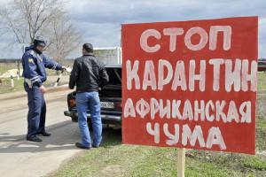 Ярославской области грозит африканская чума.